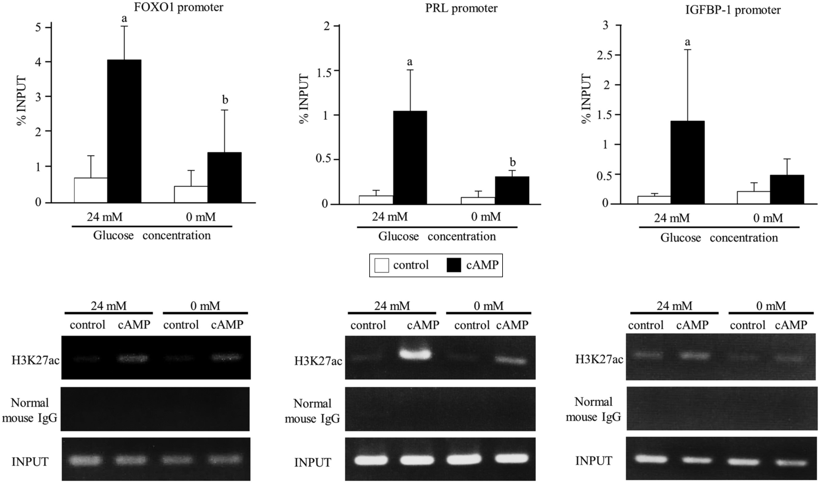 Glucose regulates the histone acetylation of gene promoters in