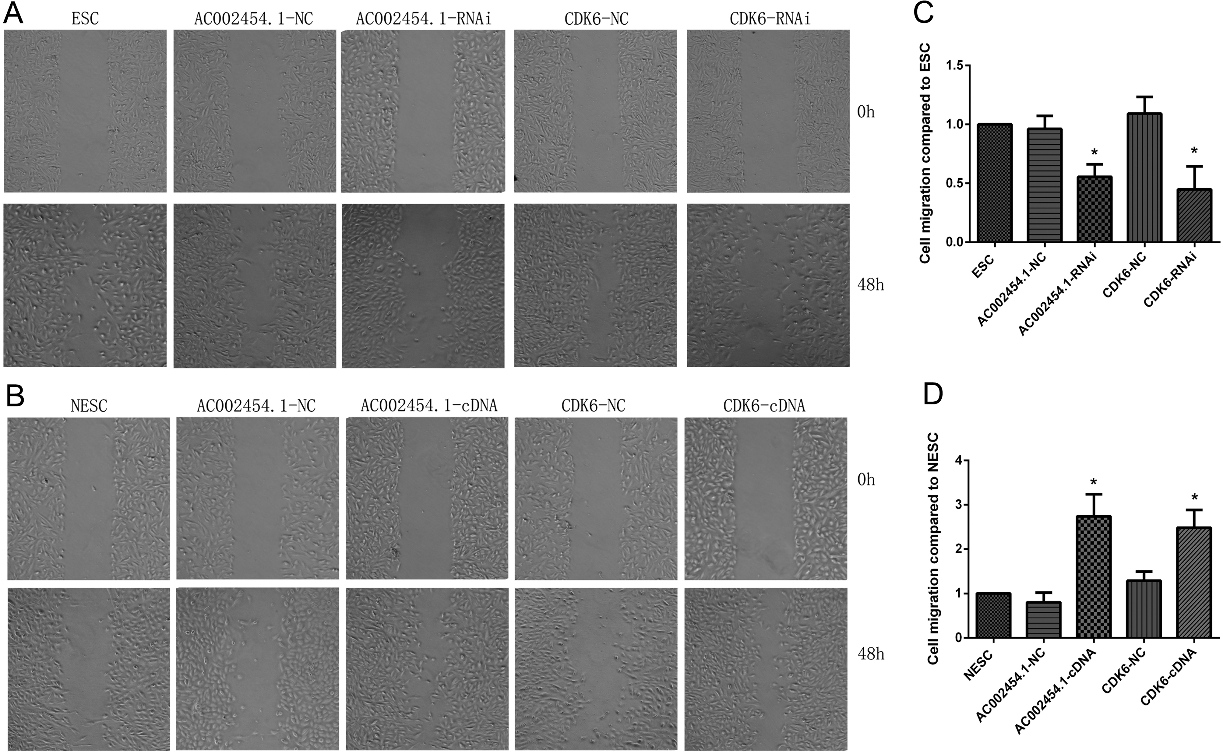 AC002454 1 and CDK6 synergistically promote endometrial cell