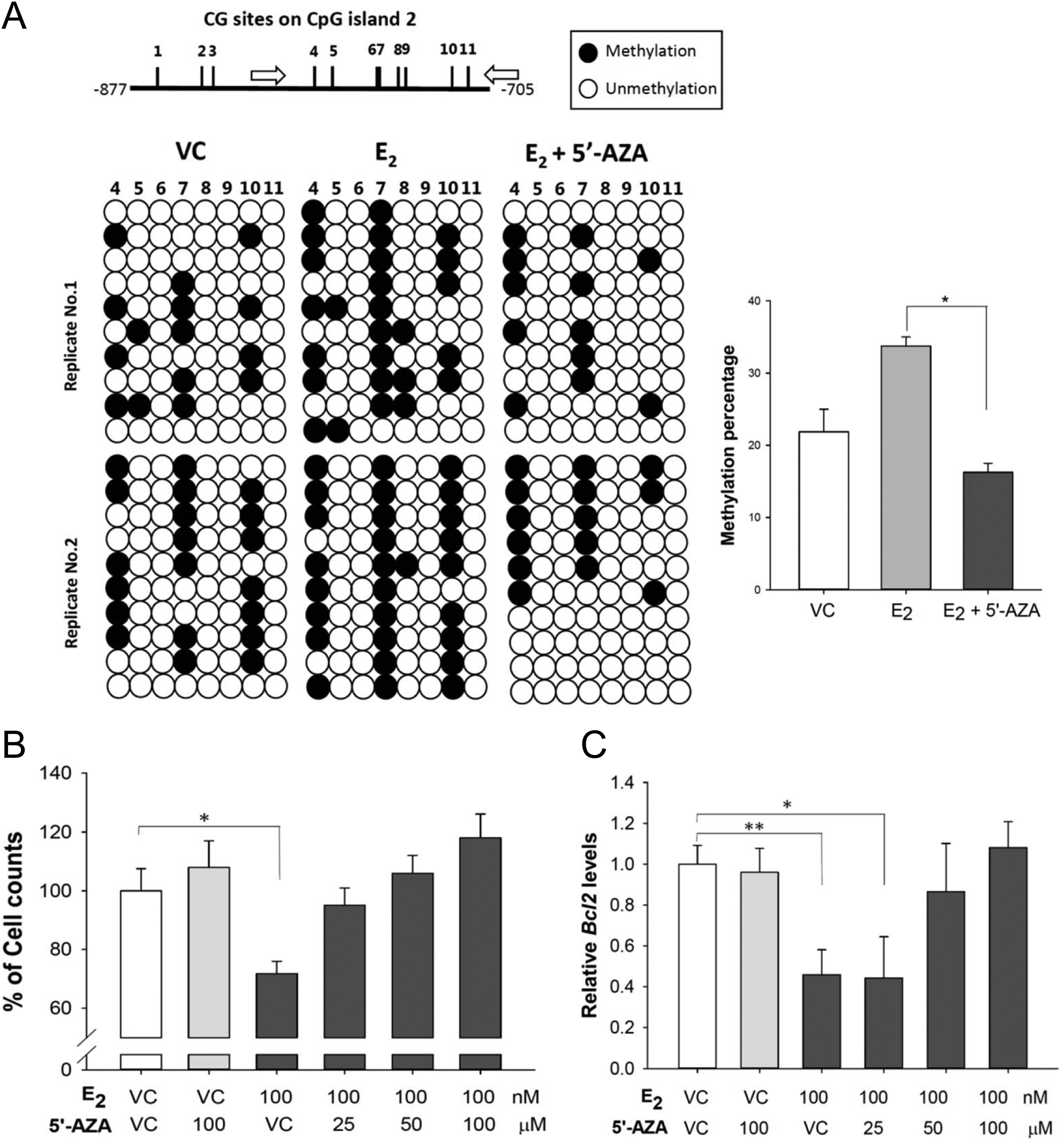 Estrogen suppresses bcl2 expression through dnmt1 in
