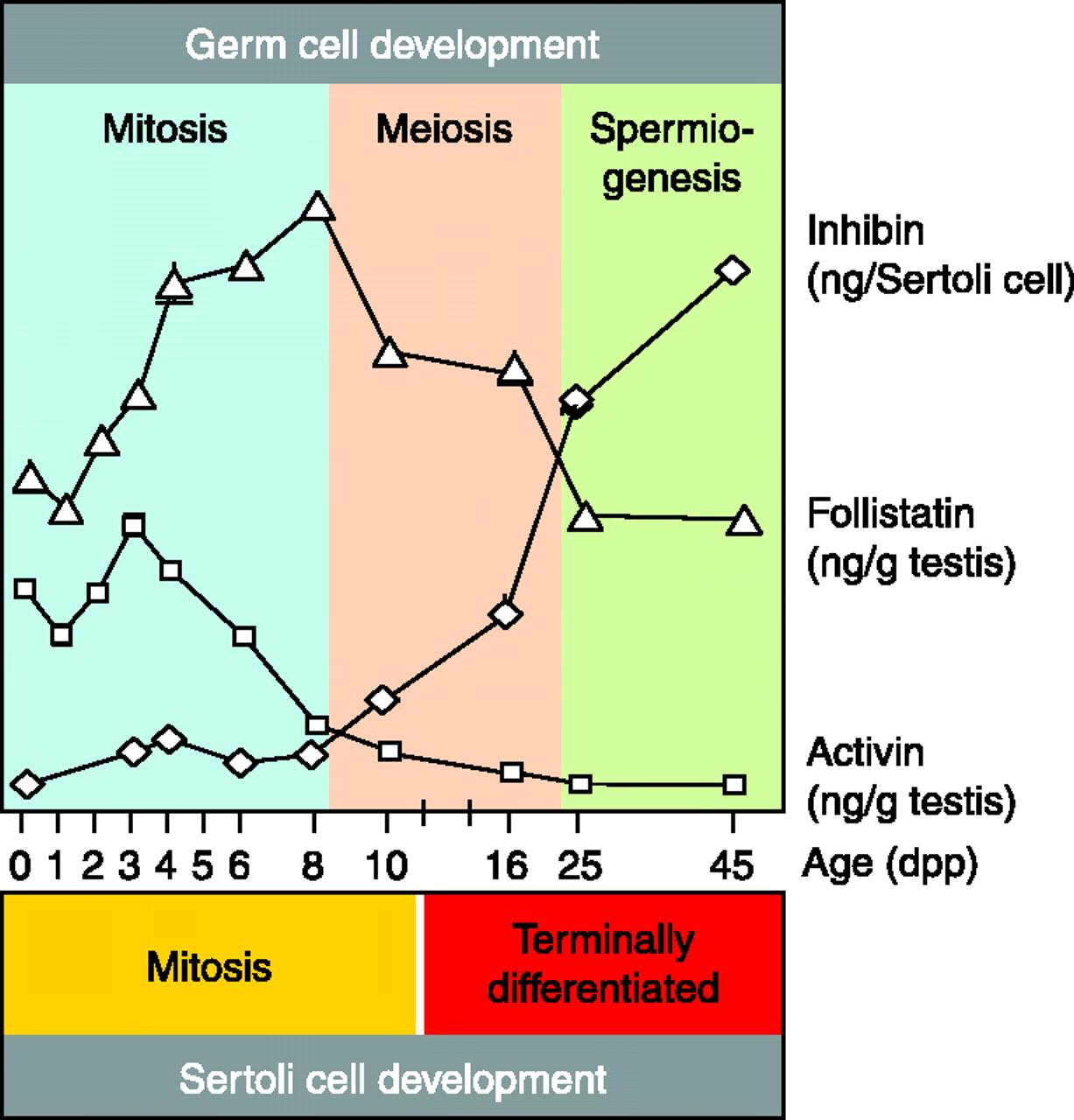 Inhibin, activin, follistatin and FSH serum levels and testicular ...