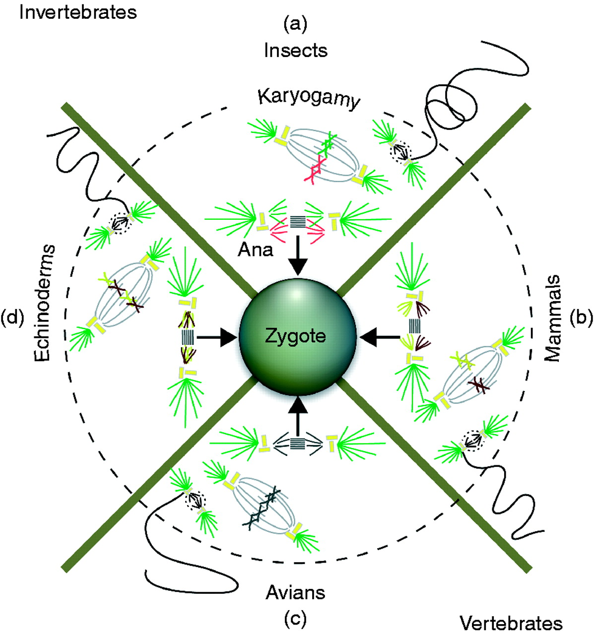 The Biology And Evolution Of Polyspermy Insights From Cellular And