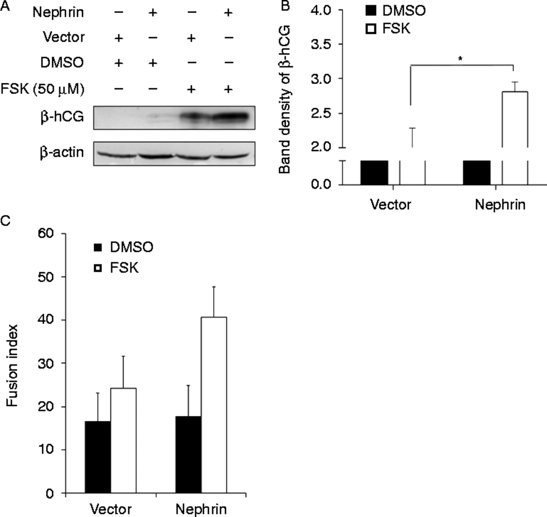 Involvement of nephrin in human placental trophoblast