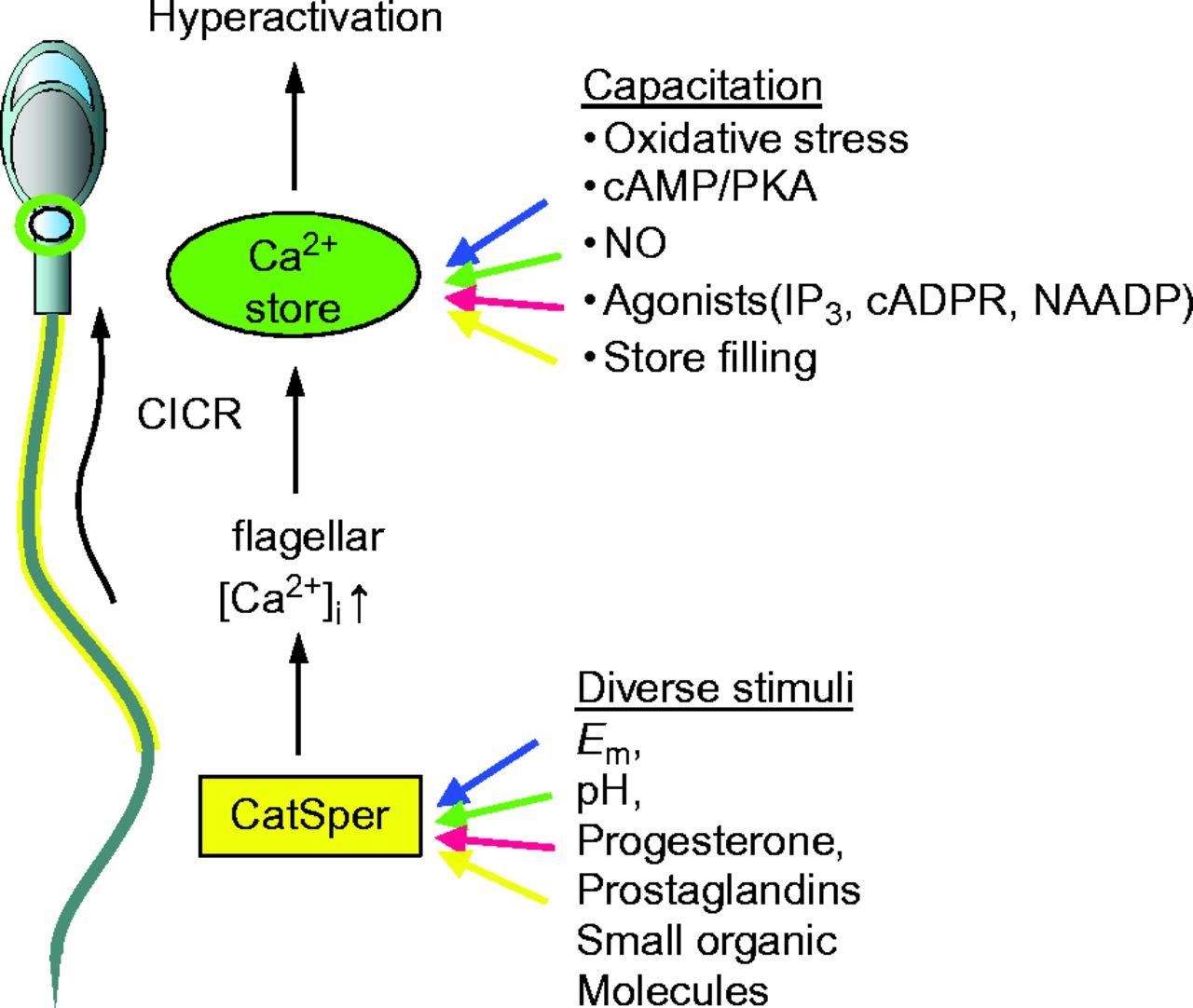 Prostaglandins in sperm something