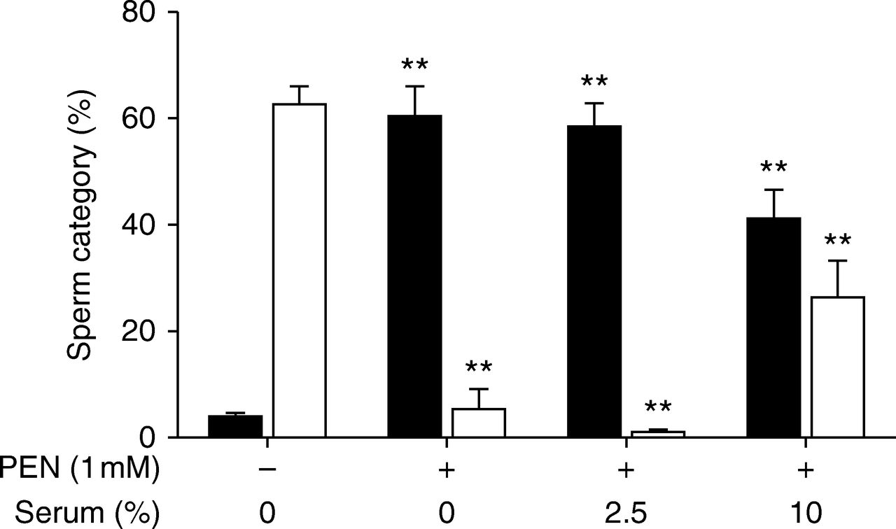 Penicillamine prevents ram sperm agglutination in media that