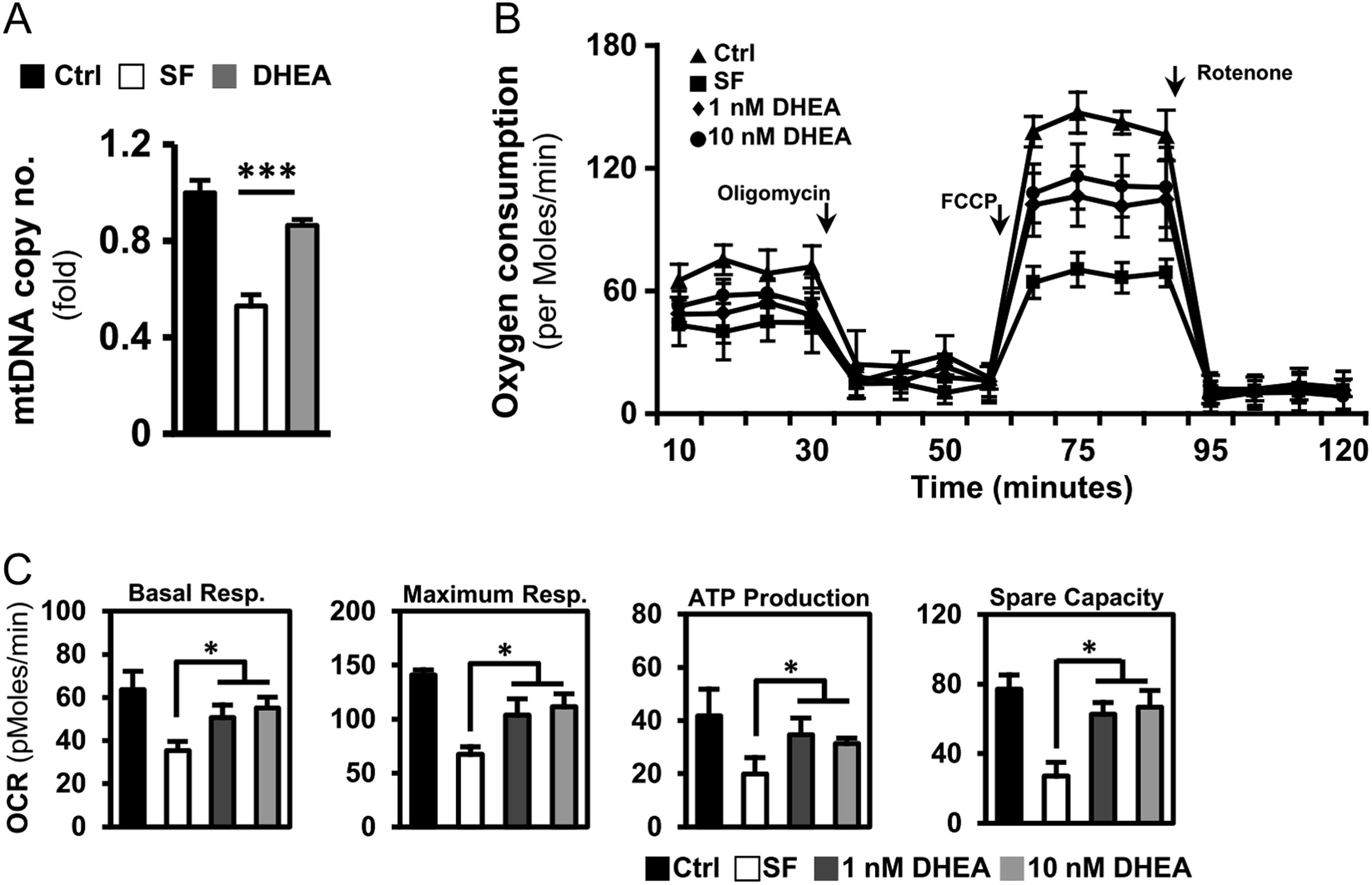 dhea protects mitochondria against dual modes of apoptosis and rh rep bioscientifica com