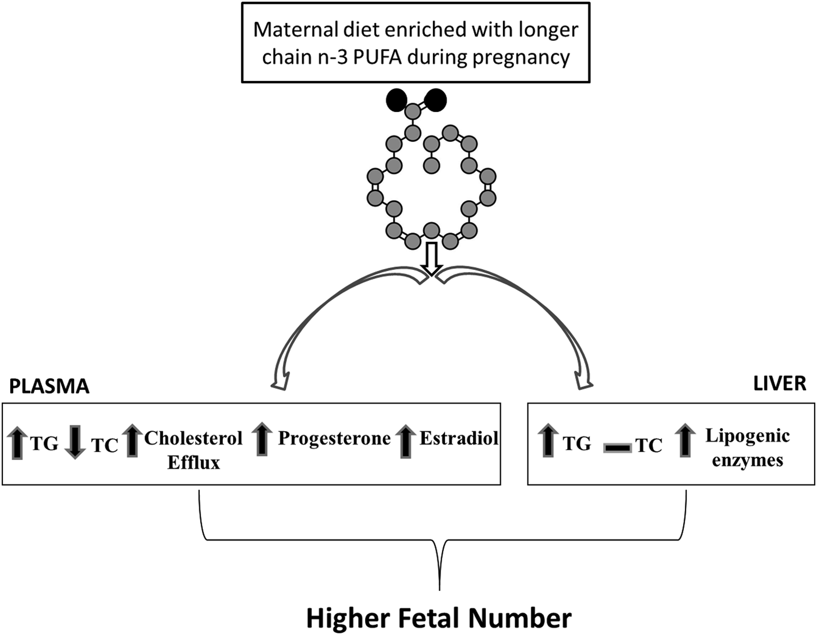 A low-fat diet enriched in fish oil increased lipogenesis and fetal