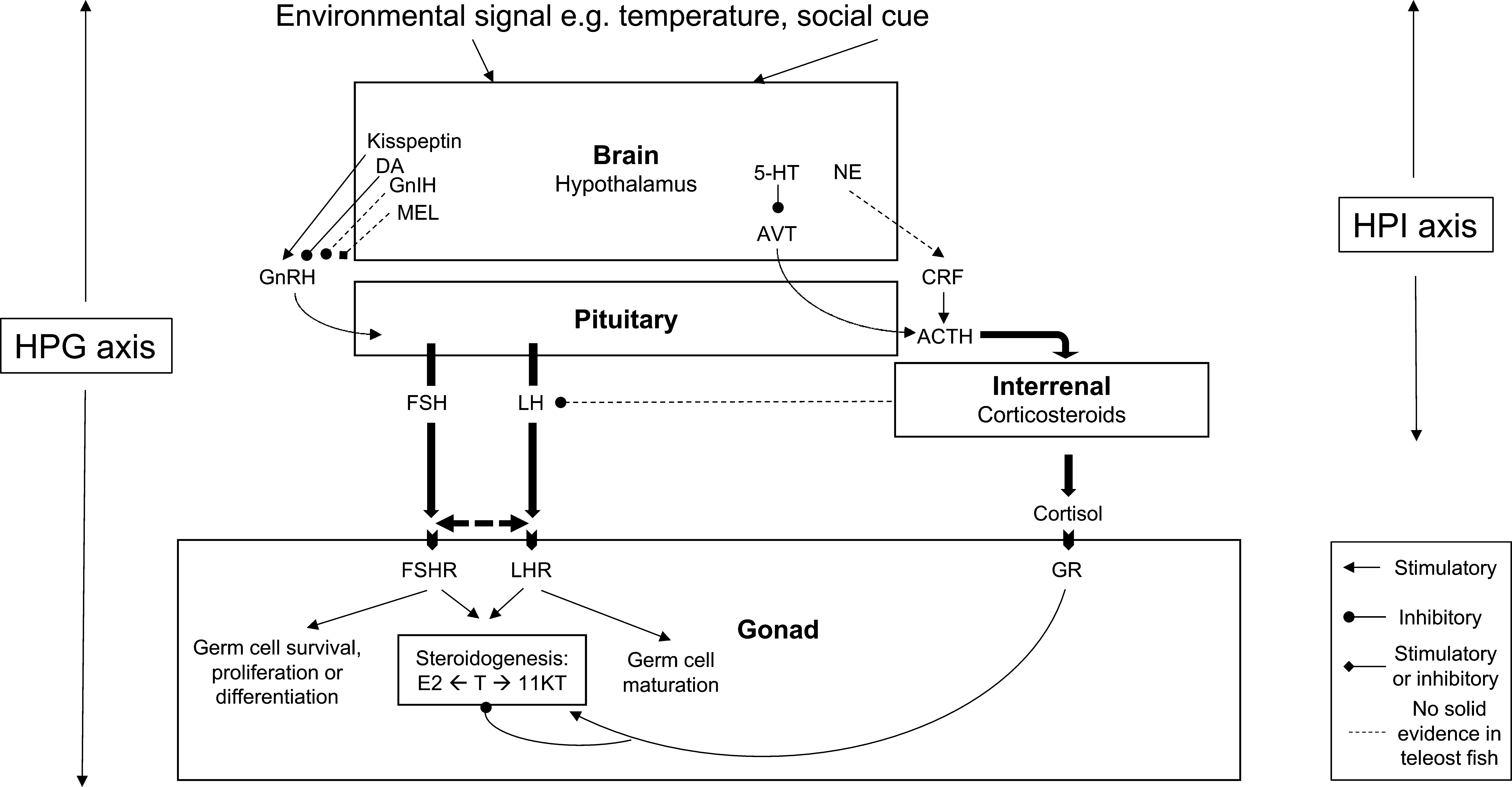 stress and sex does cortisol mediate sex change in fish? in
