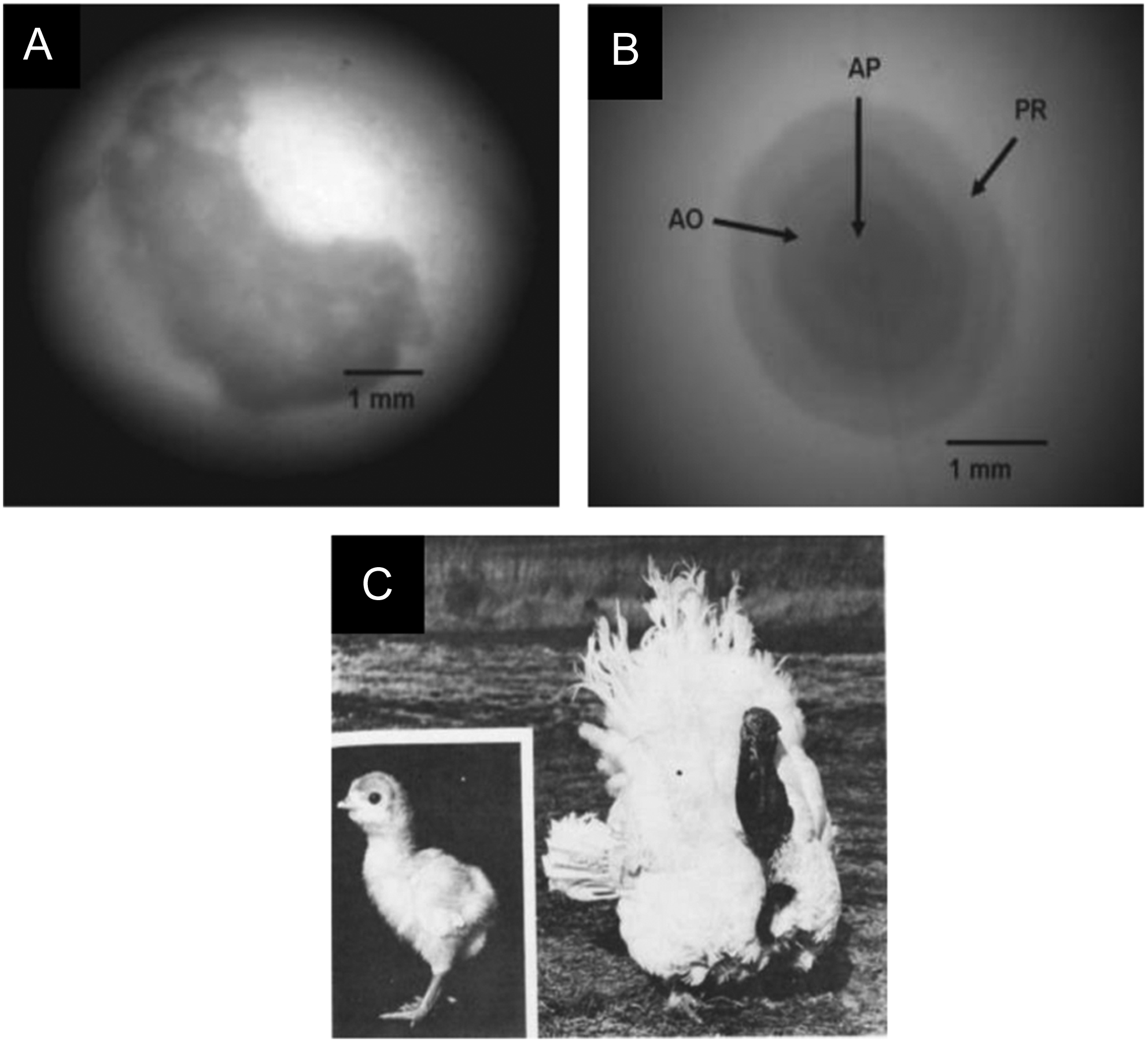 Parthenogenesis in birds: a review in: Reproduction Volume